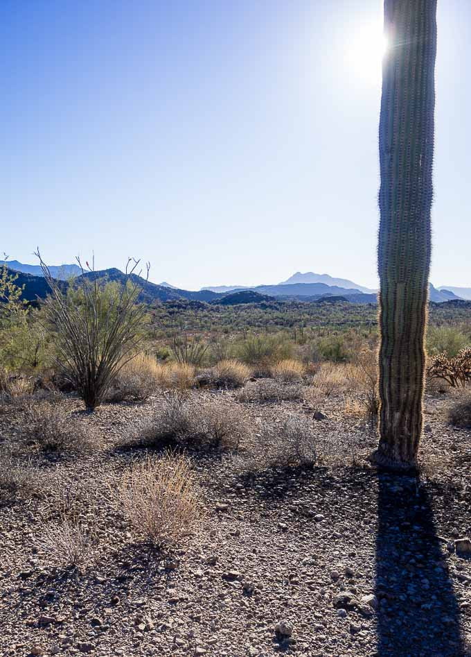 organ pipe cactus, driving from san diego to tucson