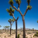 What to Do in Joshua Tree National Park – California